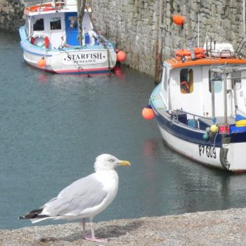 Porthleven and seagul